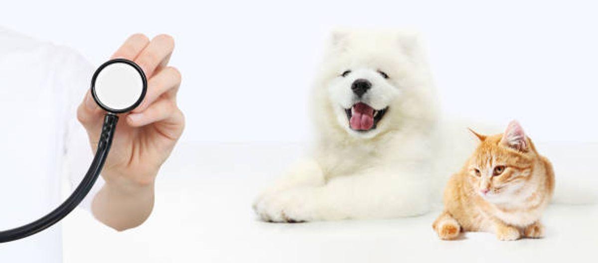 Figo Pet Insurance Reviews