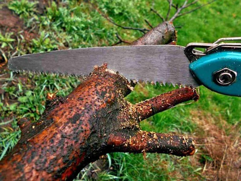 Tree Removal Service In Stoughton Ma